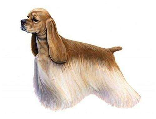 可卡犬美容包括哪些